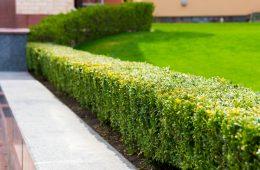 Zo ontwikkel je een mooie onderhoudsarme tuin