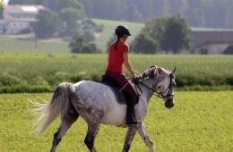 3 handige paardrij tips